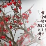 『梅もどき (大掃除とちょっと宣伝)』の画像