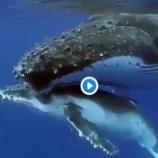 『クジラの お母さんの愛 ♡』の画像