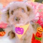 八戸ドッグローズ トリミング小型中型犬専門 ペットホテルは小型犬のみ(夜間に吠える子や、ケージで寝ることの出来ないワンちゃんはお預かりできません) 予約制 0178-38-7451