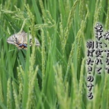 『蝶蛾』の画像