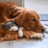 『アメリカで新たな動物保護法案が提出される。虐待者には最大7年の懲役』の画像