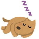 【あっ…】イッヌ(15)、1日20時間くらい寝てるようになる……