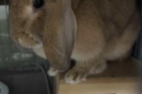 【画像あり】ワイのかわいいうっさを淡々と貼るスレがこちらやで!!!!!のサムネイル画像