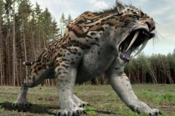 古代最強の肉食獣サーベルタイガーは本当にマンモスを狩ることができたのだろうか・・・