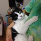 猫兄弟の初対面!新宿のハナ VS 十条のレオンの写真
