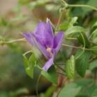 『新品種続々登場【庭で起きる奇跡】』の画像