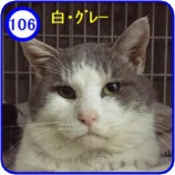 『里親募集【福丸】106』の画像