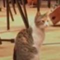 【ネコ】 やっぱりトルコはこうだよね。クラシックコンサートに猫が乱入した → こうなる…