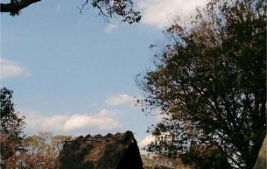 『桜2014☆蜆塚公園』の画像