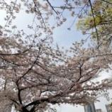 『靭公園で桜を見てきました。』の画像