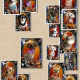 『2013-10-13のわんちゃん達』の画像