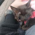 子猫が暴れる、ひっかく、爪が痛い、爪切りが出来ないというご相談