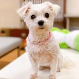 『【犬】ゆいちゃんとジルくん トライアル決定』の画像