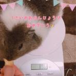もるちゃんの日常☆