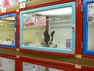 店員「ペットが高くて買えないって人は保護動物も飼うな」 ツイ民「金持ちしか楽しむ資格ないのか?」 店員「