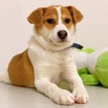 『【犬】ゆずくん(子犬・雑種)家族が決まりました』の画像