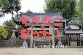 こんなところに!若宮神社付近でサワガニおった!~探せば意外と他にもいるのかもしれない~