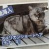 大和田南那と撮られたキンプリ高橋海人の猫の名前がヤバいwwwwwwwwwww