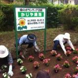『戸田市五差路そばの鍛冶谷町会花壇の花の植え替え』の画像