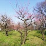『大阪城梅園 2020年3月』の画像