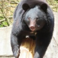 【八幡平】山菜採りをしていた女性がクマに襲われる・・・