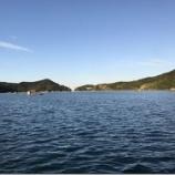『久しぶりのサヨリ 鳴門ウチノ海 (2019/11/30)』の画像