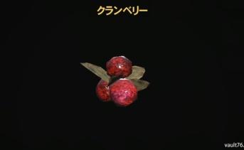 クランベリー(Cranberries)