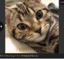 猫はなぜかわいいのか