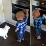 『オーブンで危ない遊びをする赤ちゃんを飼い猫が引き止める』の画像