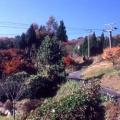10月下旬~11月中旬 紅葉