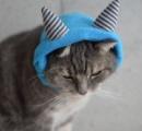 【画像】節分なので猫に鬼のコスプレをしていただいた