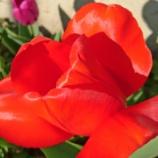 『【写真】 Xperia X compact 写真 作例15』の画像