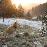 『清き朝陽』の画像