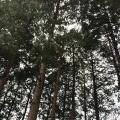 ハイキングの下見に行ってきました(^-^)/