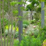 『Laboratory Garden2』の画像