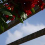 『マクロで荒ぶる2012の薔薇 〜横浜山下公園にて』の画像