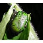 『虫の移り変わり』の画像