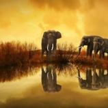 『世界ゾウの日: 美しいゾウの写真』の画像