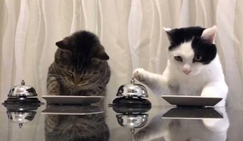 ベルを押せば餌をもらえると教えてしまった日本の猫映像が面白すぎると海外大絶賛