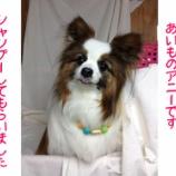 『富山新庄店スタッフ 愛犬アニーと過ごす楽しい休日ブログ』の画像