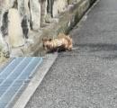 謎の動物の正体は…毛はまばら、ネズミのような尻尾 ※画像