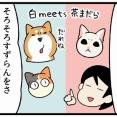保護した子猫をついに先住柴犬と猫に会わせてみた話1