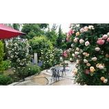 『薔薇の季節』の画像