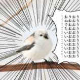 『【乃木坂46】賀喜遥香の初センターを知り、発狂している公式アカウントを発見wwwwww』の画像