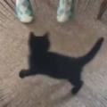 保護した子ネコは元気になったかな? 椅子に座って足をバタバタしてみる → 子猫はこうなる…