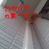 『家のバルコニー蜂の巣駆除戦記。』の画像