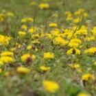 『庭の新入りは運命の出会い、それとも招かざる客?花も実も毒もある園芸生活』の画像