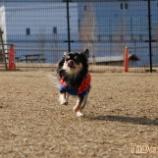 『犬笛の効果テキメン☆』の画像