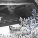 『クモの糸』の画像