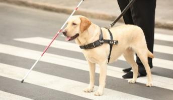 盲目少女「私の盲導犬が獰猛すぎる」盲導犬「ガオオォォォォォォォン!!!」
